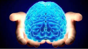 مغز شما از چه نوعی است؟